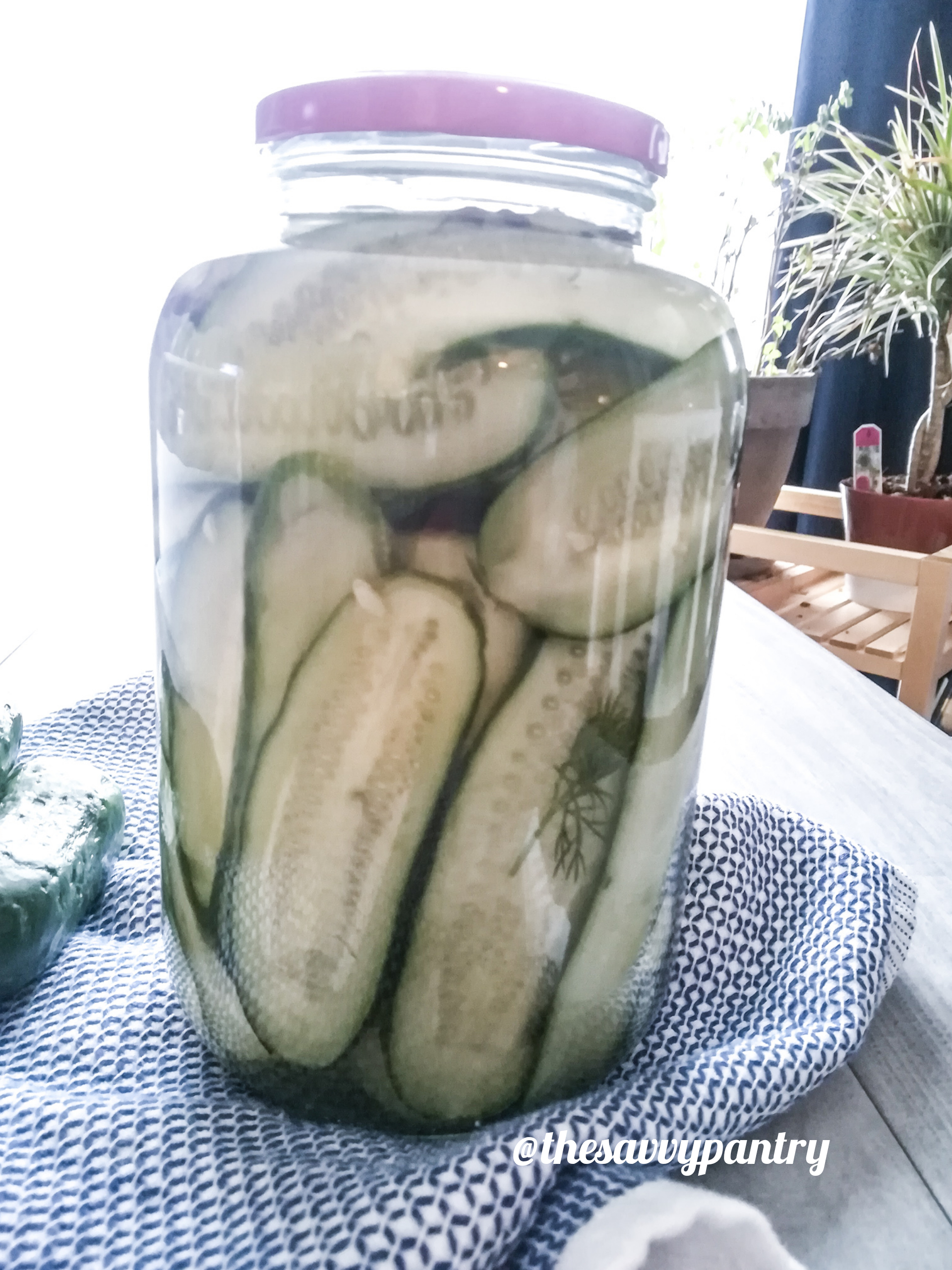 TheSavvyPantry-garlicdillpickles-02.jpg